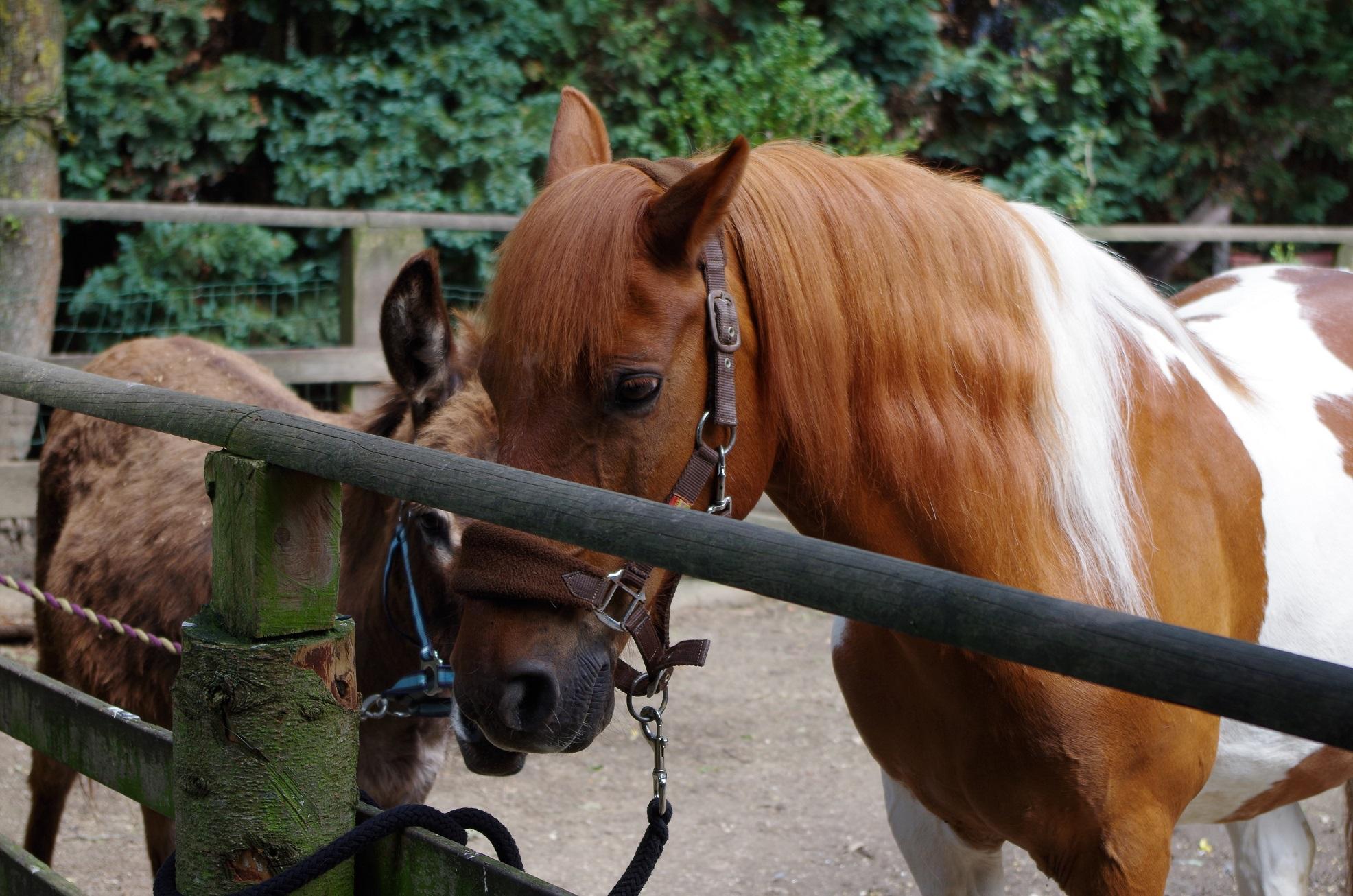 Pferde auf Mallewupp